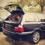 hund in auto einsteigen lernen